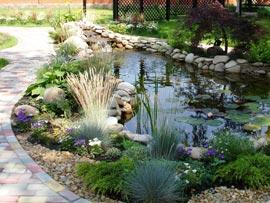 Как высаживать растения для пруда?