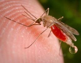 Как защититься от насекомых?