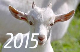 Как подготовиться к встрече Нового 2015 года?