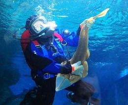 Начинающим подводным охотникам. Как выбрать гидрокостюм?