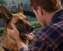 Как собаке  удалось приручить человека?