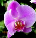 Каковы особенности выращивания орхидей?