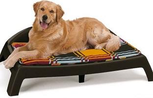 Как обеспечить собаке родной дом?
